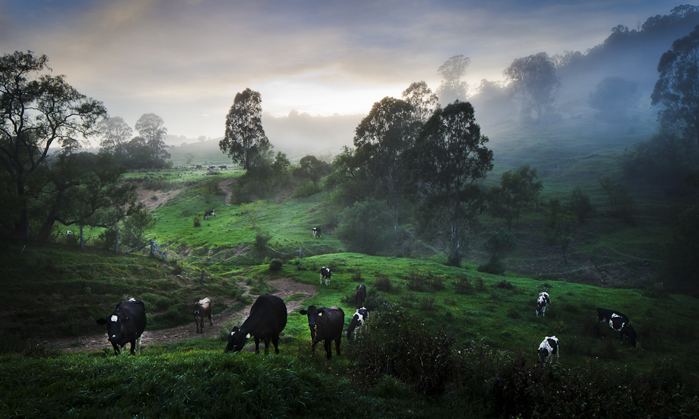 s-dairy-farm-sunrise-landscape-cows1